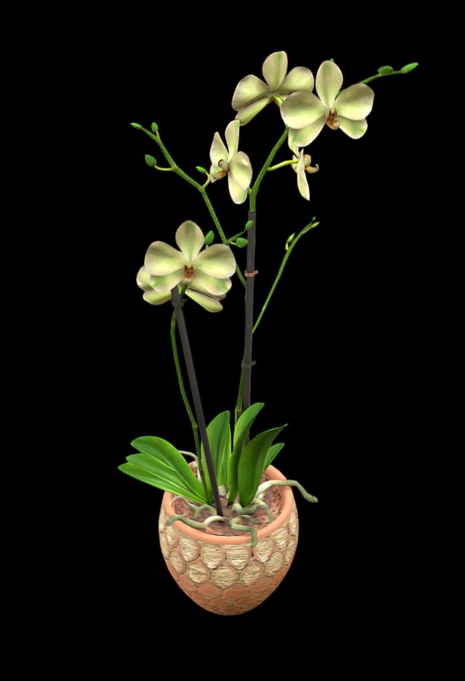 Eine Pflanze in 3D modeliert.